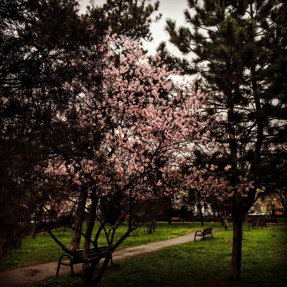 Joyfulperspectives_Oradea (27)